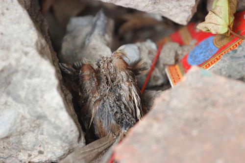 cai chet bi thuong cua chim phong sinh mua vu lan - 9