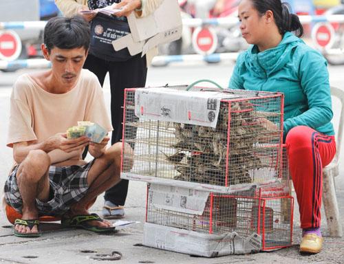 cai chet bi thuong cua chim phong sinh mua vu lan - 1