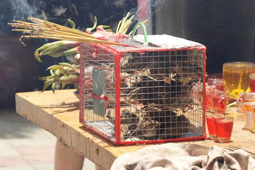cai chet bi thuong cua chim phong sinh mua vu lan - 3