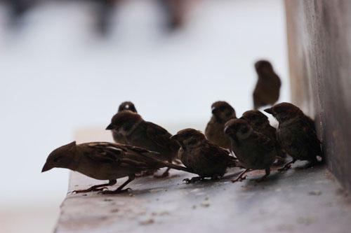 cai chet bi thuong cua chim phong sinh mua vu lan - 4