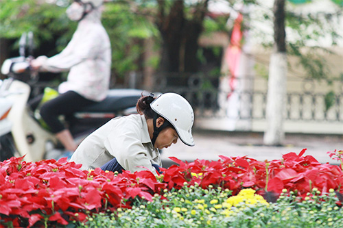 duong pho ha noi ruc ro co hoa dip quoc khanh 2/9 - 14