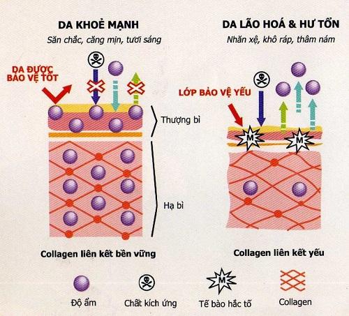 bo sung collagen khong dung cach: loi bat cap hai - 1