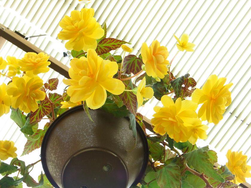 5 loai hoa no bung ruc ro khi dong sang - 3