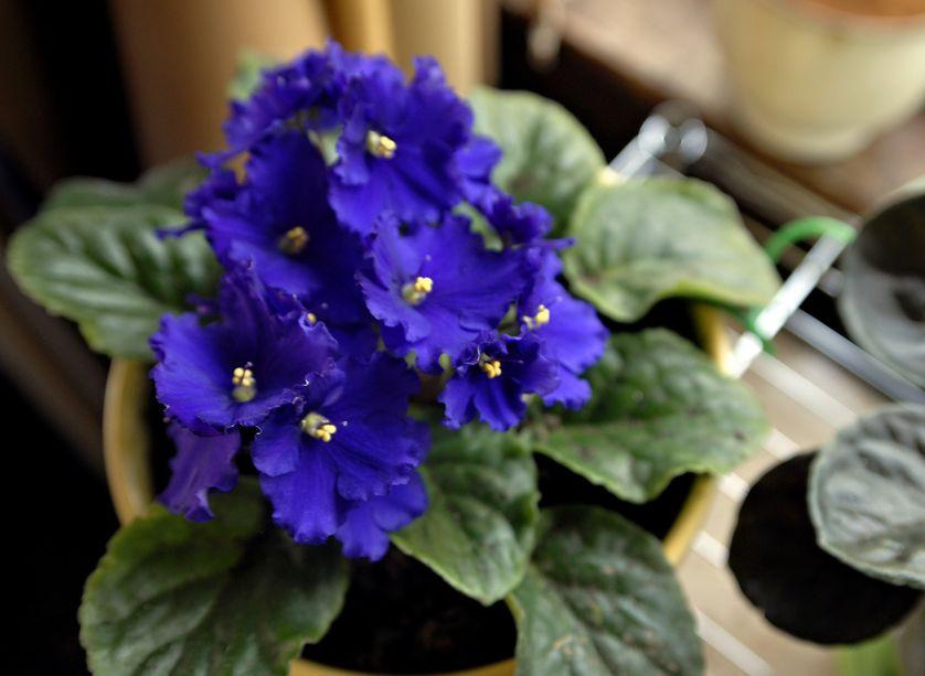 5 loai hoa no bung ruc ro khi dong sang - 1