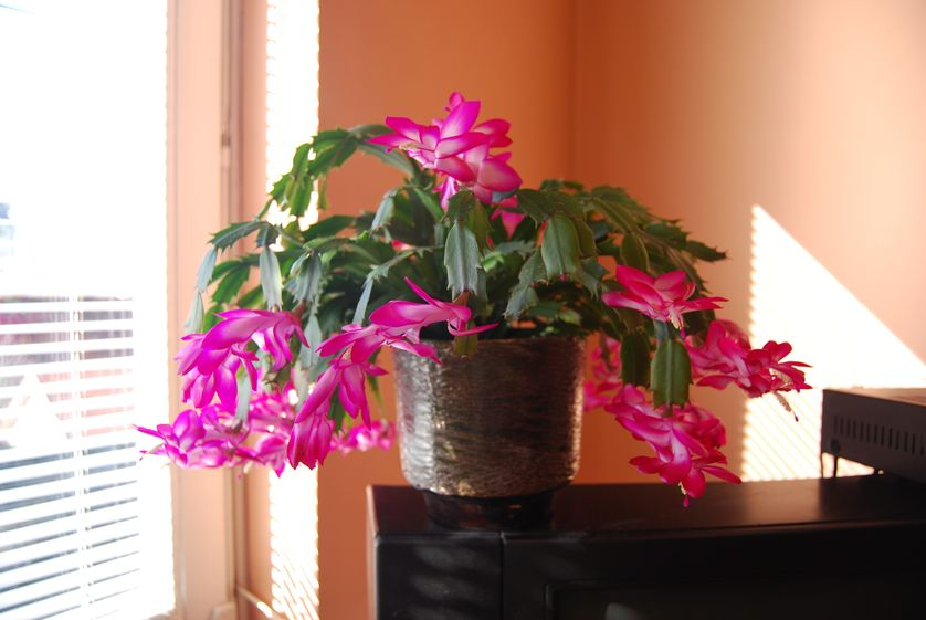 5 loai hoa no bung ruc ro khi dong sang - 4
