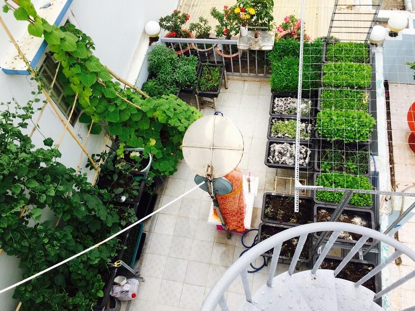 Vườn rau đủ 15 người ăn của hot girl Sài thành-1