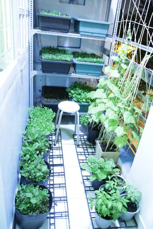 Vườn rau đủ 15 người ăn của hot girl Sài thành-2