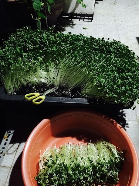 Vườn rau đủ 15 người ăn của hot girl Sài thành-3