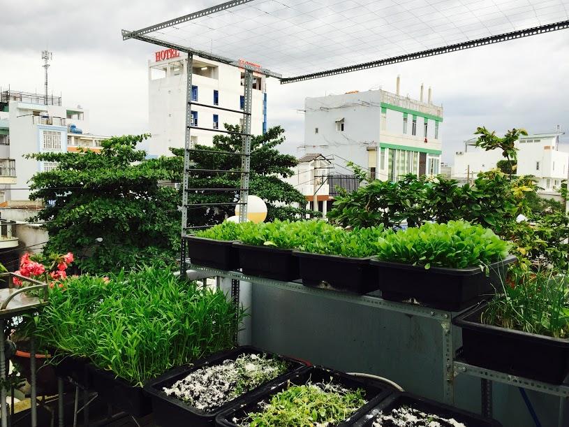 Vườn rau đủ 15 người ăn của hot girl Sài thành-4