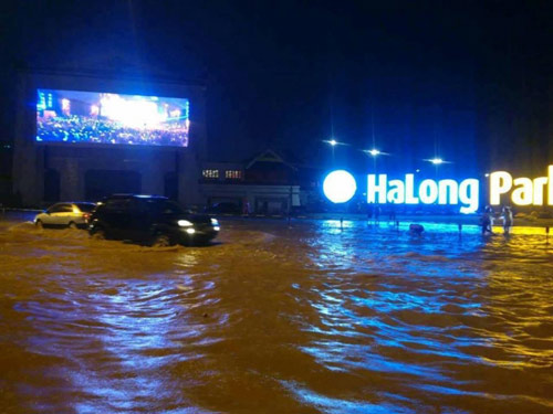 ha long, cam pha chim trong bien nuoc, 2 nguoi thuong vong - 1