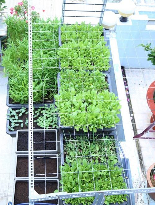 Vườn rau đủ 15 người ăn của hot girl Sài thành-6