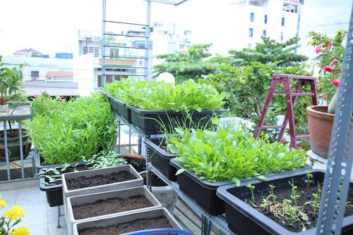 Vườn rau đủ 15 người ăn của hot girl Sài thành-7