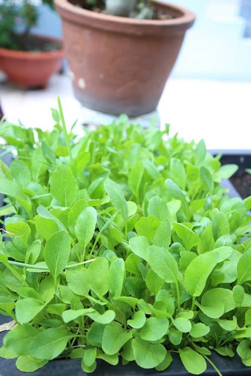 Vườn rau đủ 15 người ăn của hot girl Sài thành-9