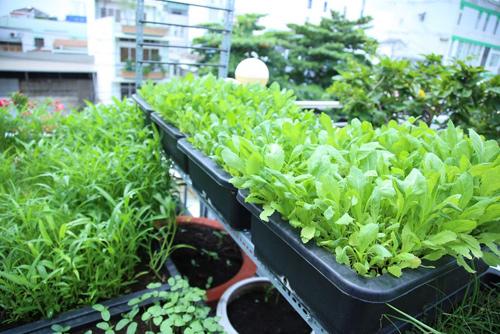 Vườn rau đủ 15 người ăn của hot girl Sài thành-10