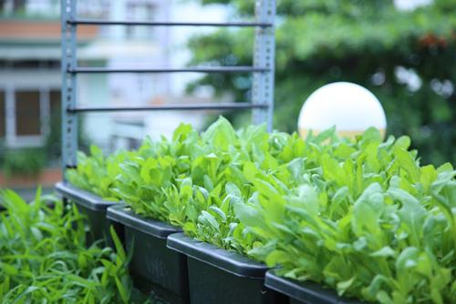Vườn rau đủ 15 người ăn của hot girl Sài thành-14