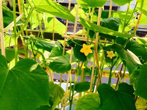 Vườn rau đủ 15 người ăn của hot girl Sài thành-16