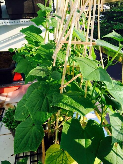 Vườn rau đủ 15 người ăn của hot girl Sài thành-17