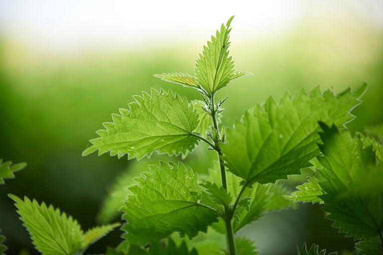 11 tuyet chieu bien 'ga mo' thanh cao thu trong rau trong pho - 6
