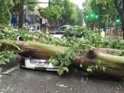 Tin tức - Bão số 1 quét tới Hà Nội, gió đang giật cực mạnh, cây đổ ngổn ngang