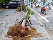 """Tin tức - Sau bão số 1, Hà Nội xuất hiện những gốc cây """"kỳ lạ"""""""