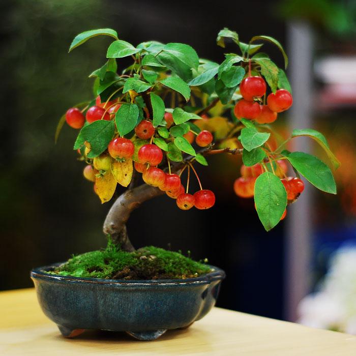 15 cay bonsai sieu doc 'co tien mua cung chang duoc' - 7