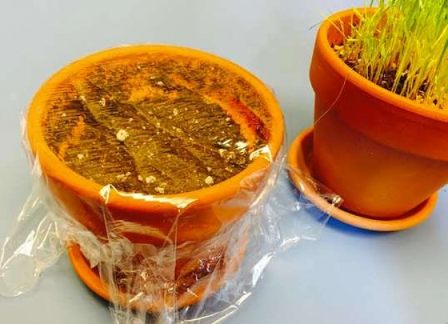 mang boc thuc pham: bat ruoi, sach tu lanh, giu hoa tuoi,... - 9