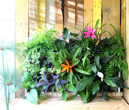 16 loại chậu cây phù hợp với mọi kiểu sân vườn-5