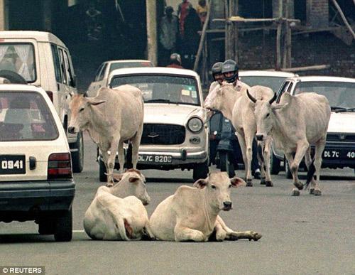 Ấn Độ: Hai chị em bị cưỡng hiếp tập thể vì nghi ăn thịt bò-2