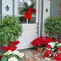 Ấm áp Giáng sinh từ ngoài cửa