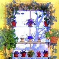 Thiên đường lá hoa bên cửa sổ