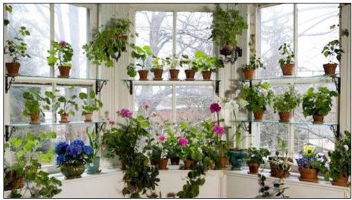 Thiên đường lá hoa bên cửa sổ - 1