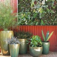 Mách nhỏ cách trồng cây treo tường cực hay