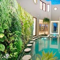 Nhà sành điệu: Vườn trên tường