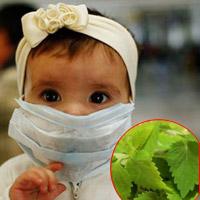Lá kinh giới- 'thuốc' cho trẻ bị cúm