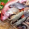 Giá cả thực phẩm chợ Tân Bình 24-2