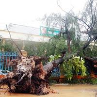 166 người thương vong, mất tích do bão số 10
