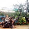 Tin tức - 166 người thương vong, mất tích do bão số 10