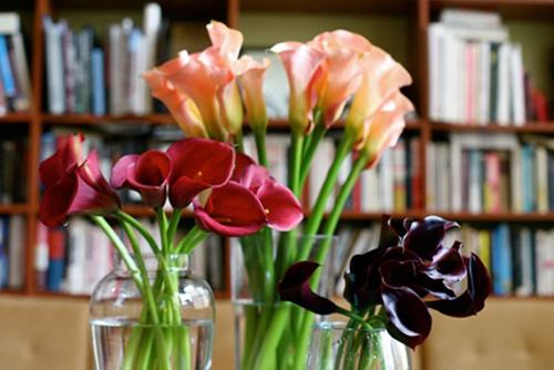 hoa dep 20-10: 3 mau hoa rum de cam - 4
