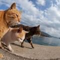Xem & Đọc - Yêu mê mệt hòn đảo toàn... mèo