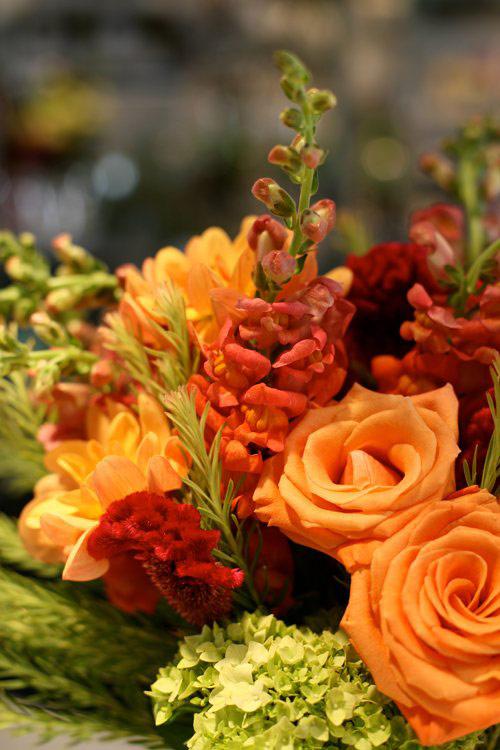 hoa dep 20-10: cam hoa mom cho dep kho che - 9