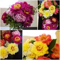 hoa dep 20-10: cam 'binh tra hoa' thom phuc - 14
