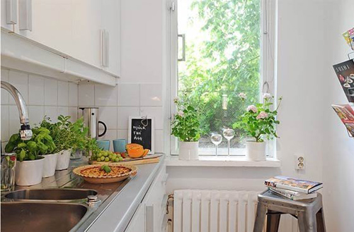 Image result for Cây cảnh tại phòng bếp
