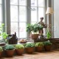 Nhà đẹp - 5 người tình xanh của phong thủy nhà bếp
