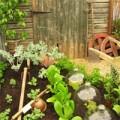 Nhà đẹp - Rau sạch mùa lạnh dễ trồng chỉ 2 tháng