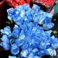 Mua sắm - Giá cả - Săn hoa hồng xanh dương làm quà ngày 20/10