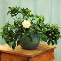 6 buoc trong hoa sung cuc 'dinh' - 11