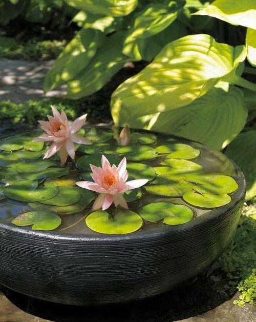 6 buoc trong hoa sung cuc 'dinh' - 9