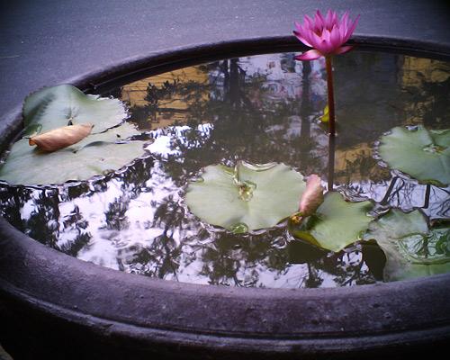 6 buoc trong hoa sung cuc 'dinh' - 10