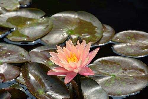 6 buoc trong hoa sung cuc 'dinh' - 1