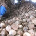 Mua sắm - Giá cả - Dừa khô tăng giá